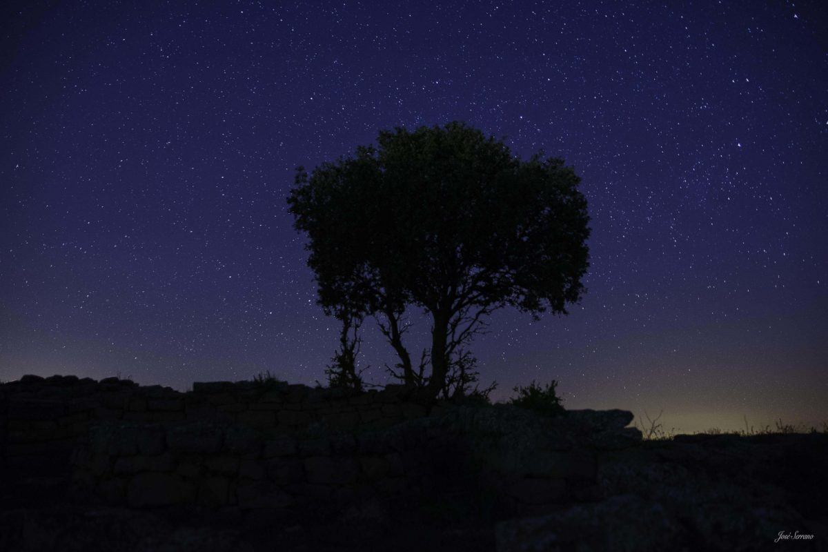 Árbol nocturno firma